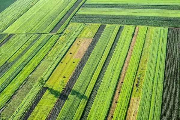 ترجمه تخصصی رشته کشاورزی