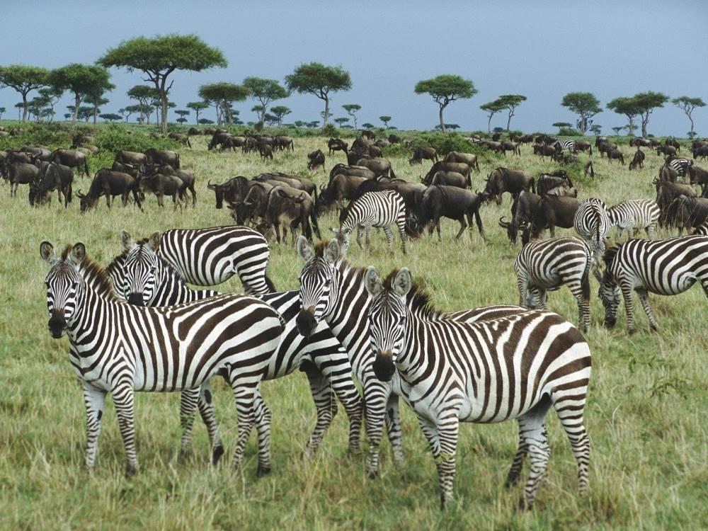 نحوه نامگذاری گونههای جانوری و گیاهی